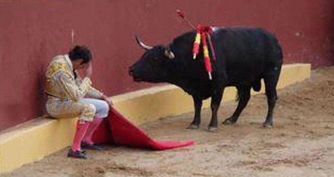Resultado de imagem para toureiros e touradas
