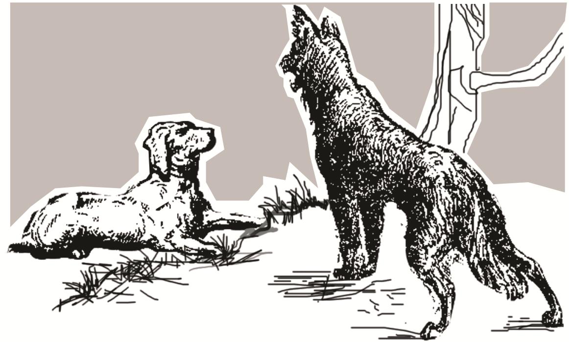Resultado de imagem para cachorro magro